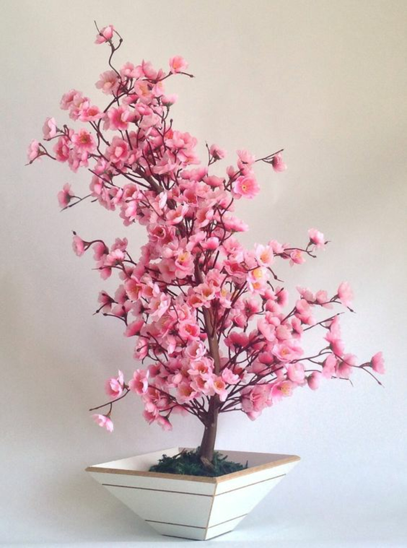 Bonsajsko drevo kupi in goji Bonsai Cerejeira Rosa