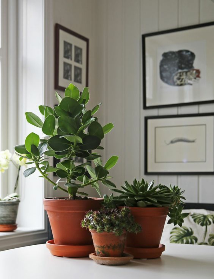 Feng Shui pictures home accessories positive energy indoor plants