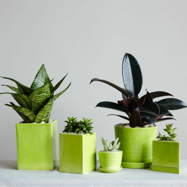 Green plants popular indoor plants pictures geometric shapes green