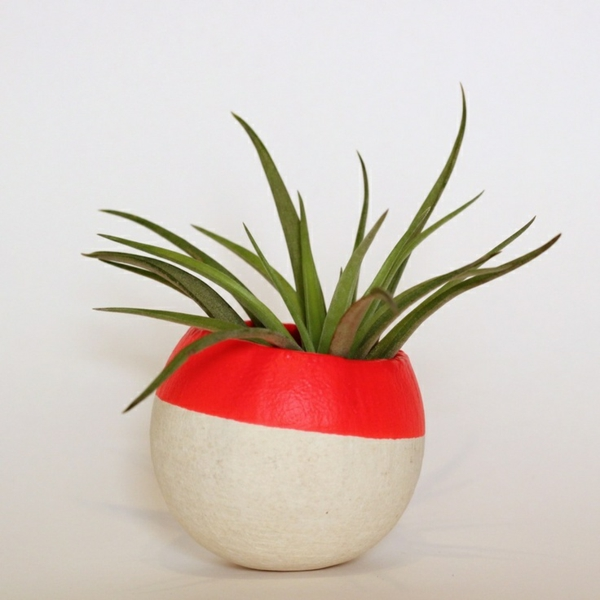 Green plants drought-proof images around designer flower pot