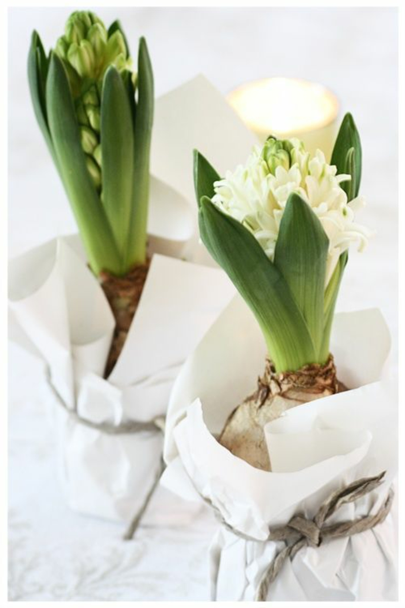 Hyacinths deco ideas with spring flowers pictures