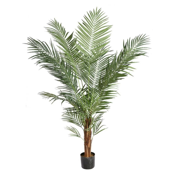 Palm species hardy as indoor plants
