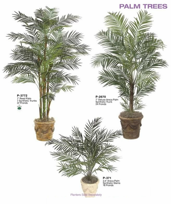 Palmtree indoor plants date-palm hardy trees
