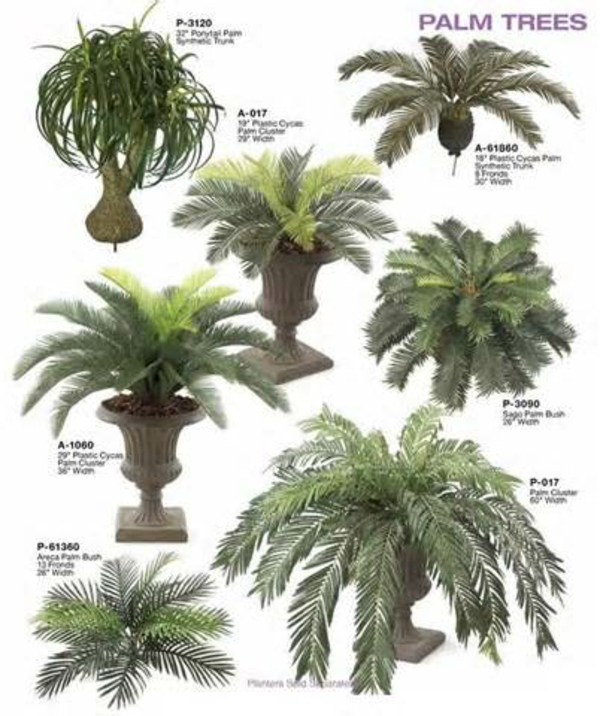 Indoor Plants date palm tree palm species hardy variety