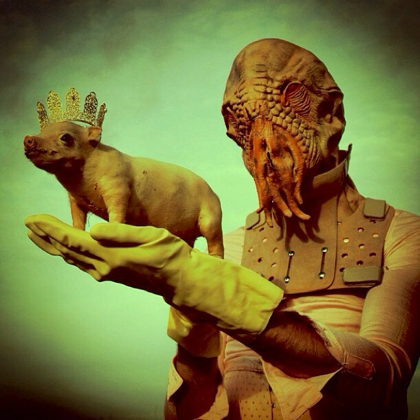 Surrealism pictures and features pig