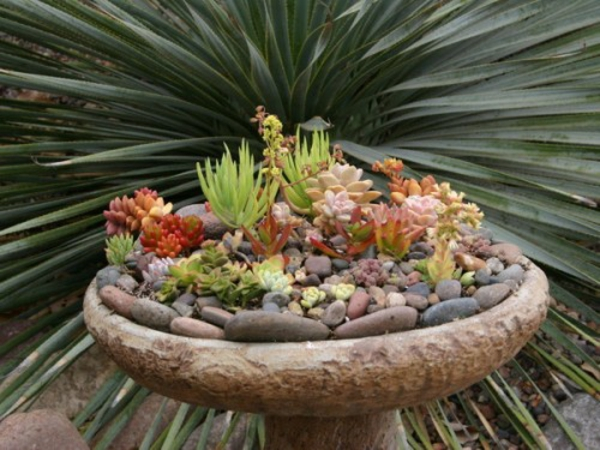 attractive decoration of fat plants stones