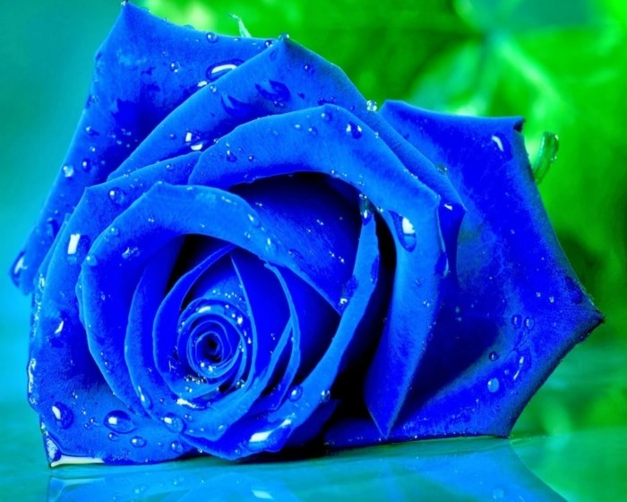 blue roses colors
