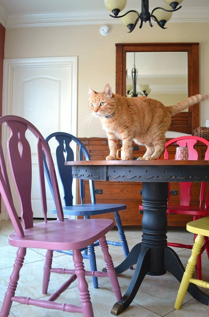 colorful kitchen colored chairs round dining table cat