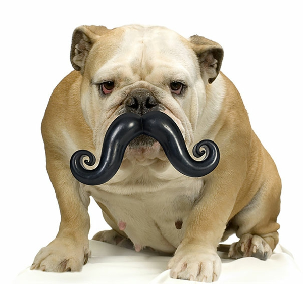 cute gift ideas for dogs mustache