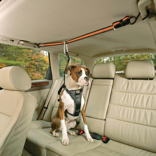 cool gift ideas for dogs car ropes