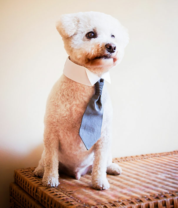 Gift ideas for dogs businessman