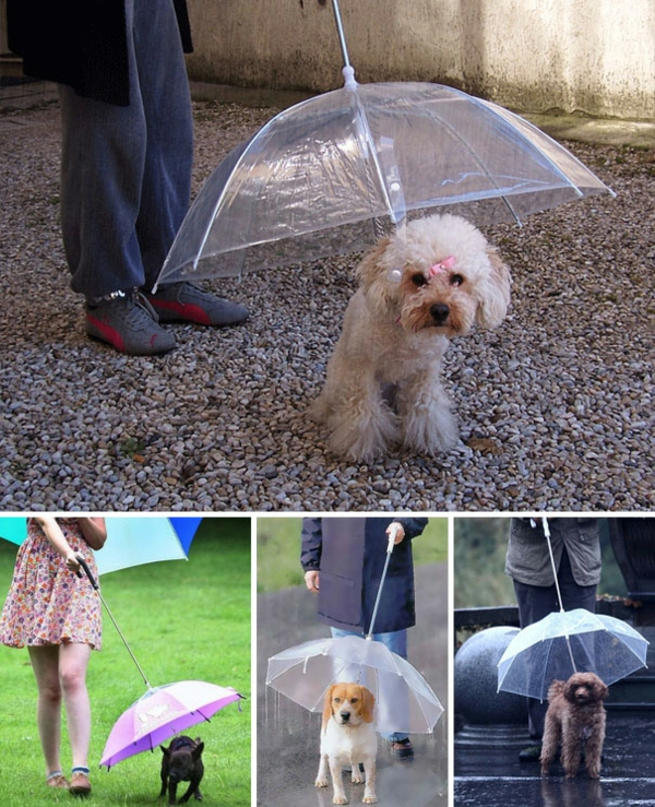 Gift ideas for dogs umbrella
