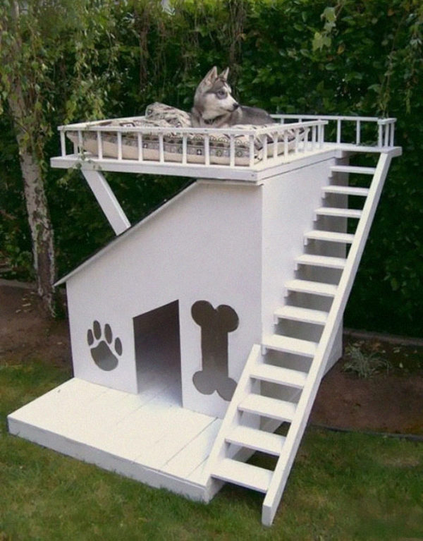 Cool gift ideas for dogs stairs wood