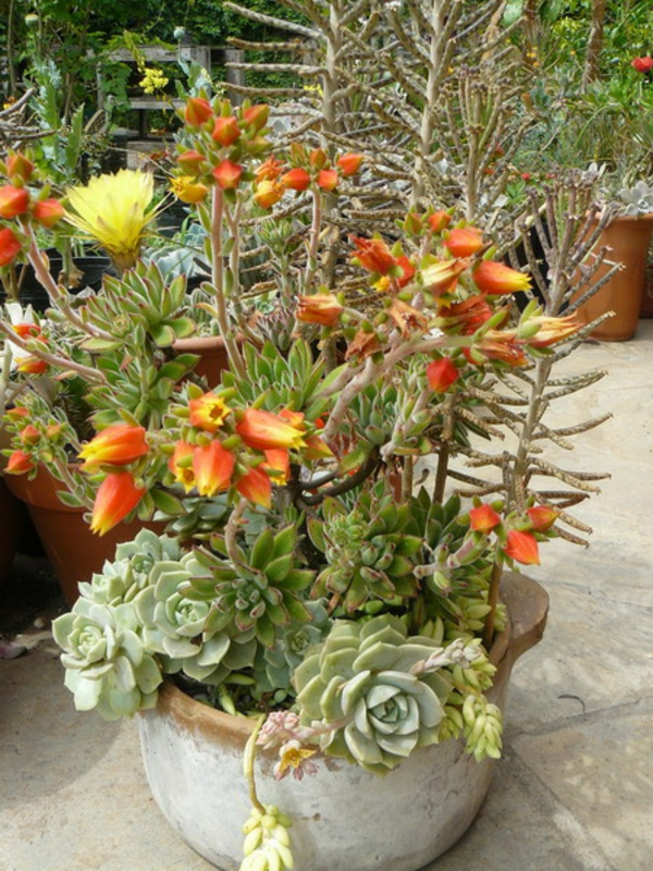 decorative ideas for the garden greasy plants flowering