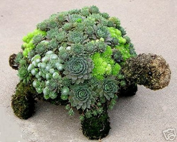 decoration ideas for the garden turtle stone