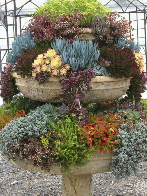 decor ideas for the garden many succulent plants