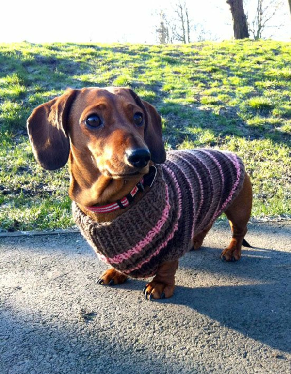 DIY-prosjekter Dachshund Donning Dog Sweater Knitting Ideas
