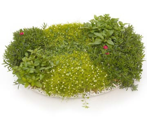 a mini garden shape fresh kitchen herbs