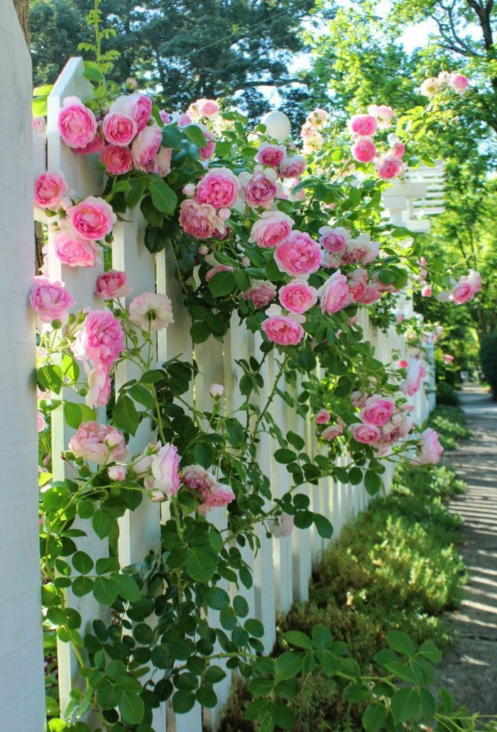 garden ideas garden fence decorate roses exterior