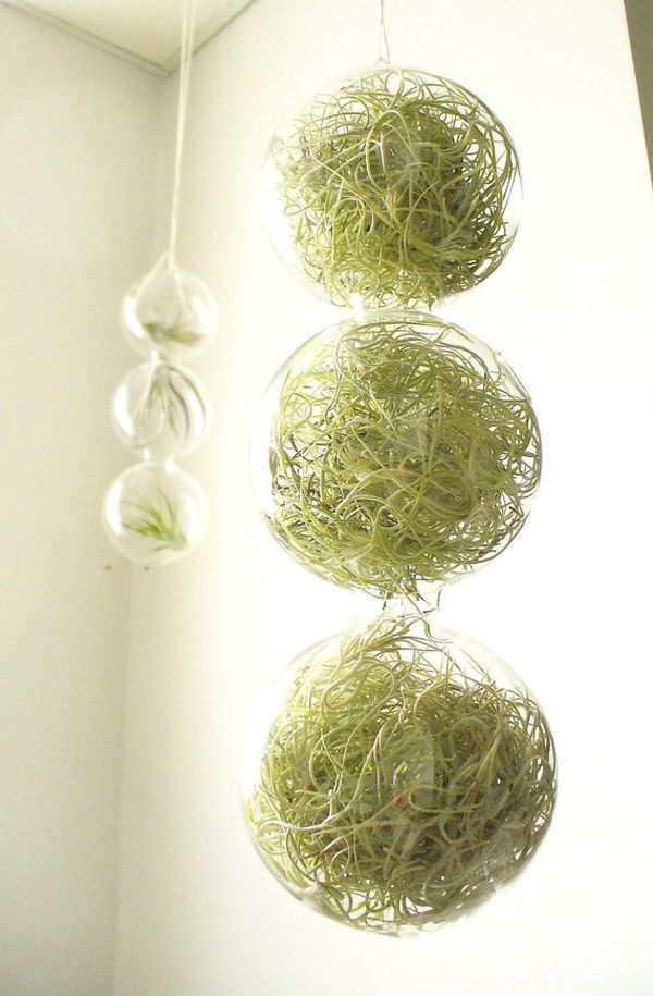 hanging flowerpots houseplants airy glass sphere