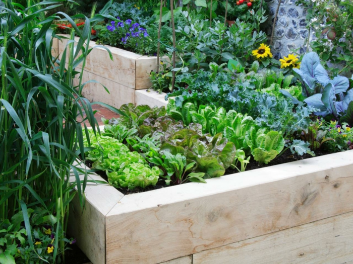 raised beds plants combine garden ideas