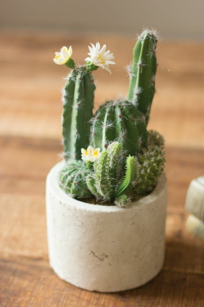 cactus species plant flat decorate