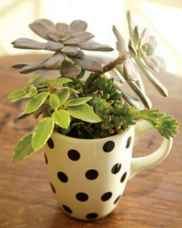 small ornament succulent coffee cup
