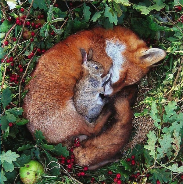 cute animal pictures fancy pets baby rabbit and fox as a pet