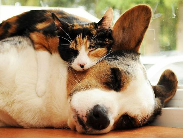 cute animal pictures fancy pets dog and cat friendship