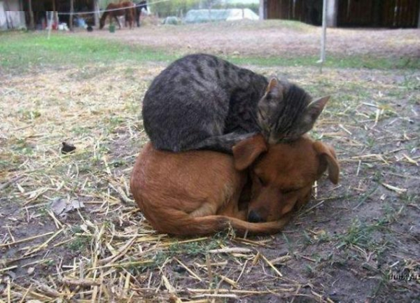 cute animal pictures fancy pets dog and cat sleeping