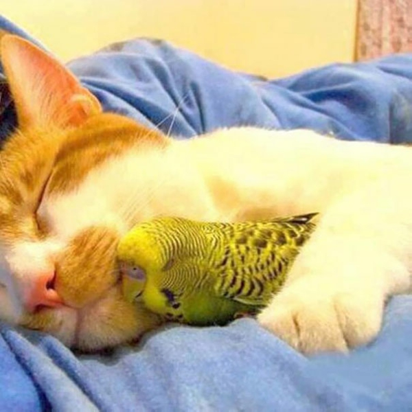 cute animal pictures fancy pets cat and parrot friendship
