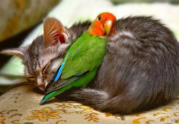 cute animal pictures fancy pets cat and parrot