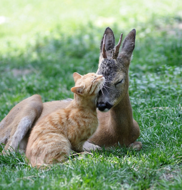 cute animal pictures fancy pets cat and deer