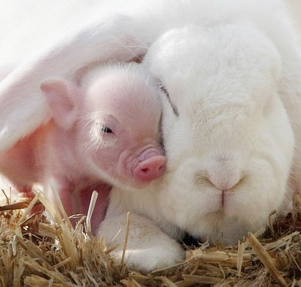 cute animal pictures fancy pets ornamental pig and rabbit