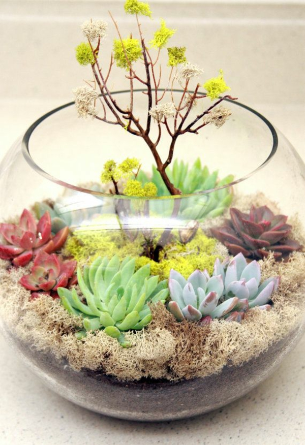 matching terrarium plants succulents fresh colors