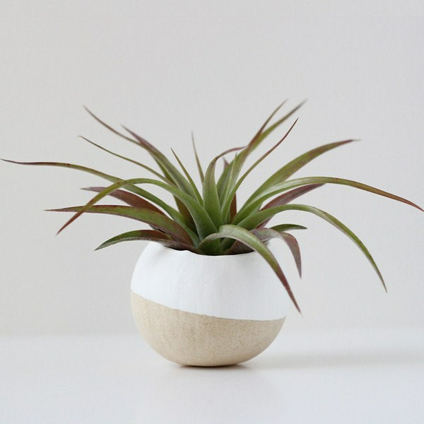 plant pfelge flowerpot Bird and Feather
