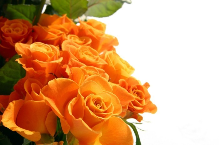 Rose color meaning orange roses