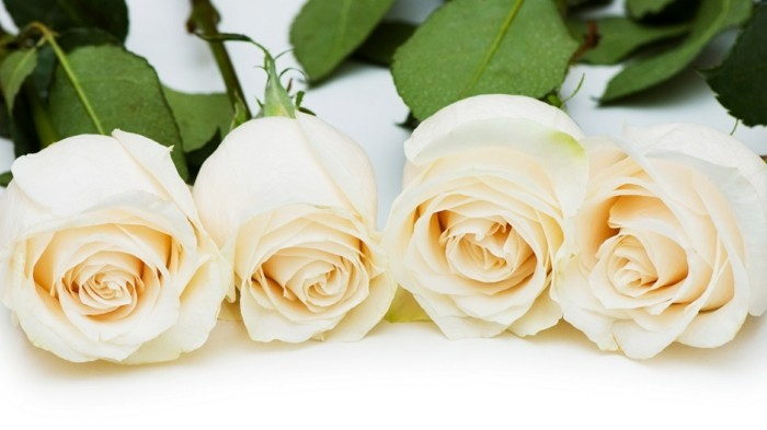 Rose color meaning white roses