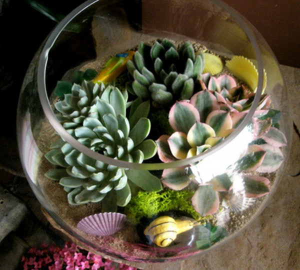 stone greenhouse-glass containers Scallops-snail