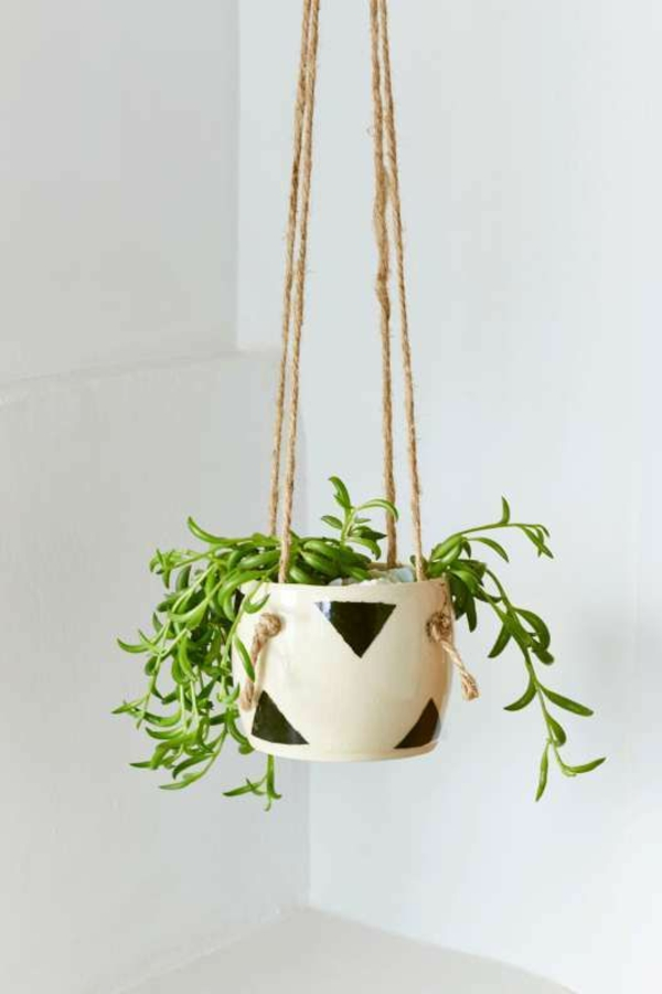 belas-houseplants-enforcamento flores papel de parede ampel