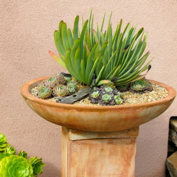 stone growth garden decoration stylish