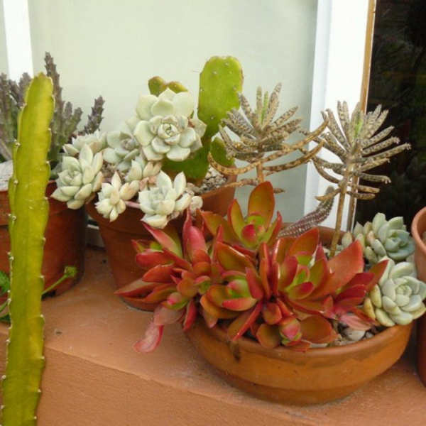 succulent flowerpots of colorful colors