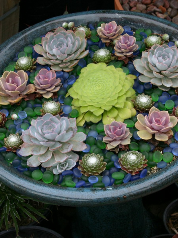 succulent colorful decorating garden