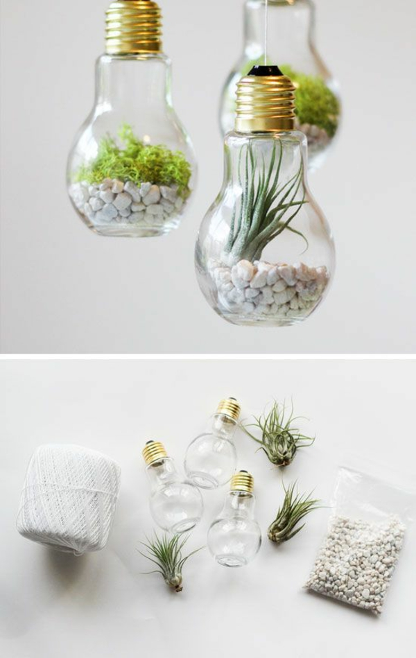 terrarium plants diy projects with light bulbs to build terrarium yourself
