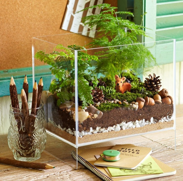 terrarium plants glass vessel rectangular desk decorate