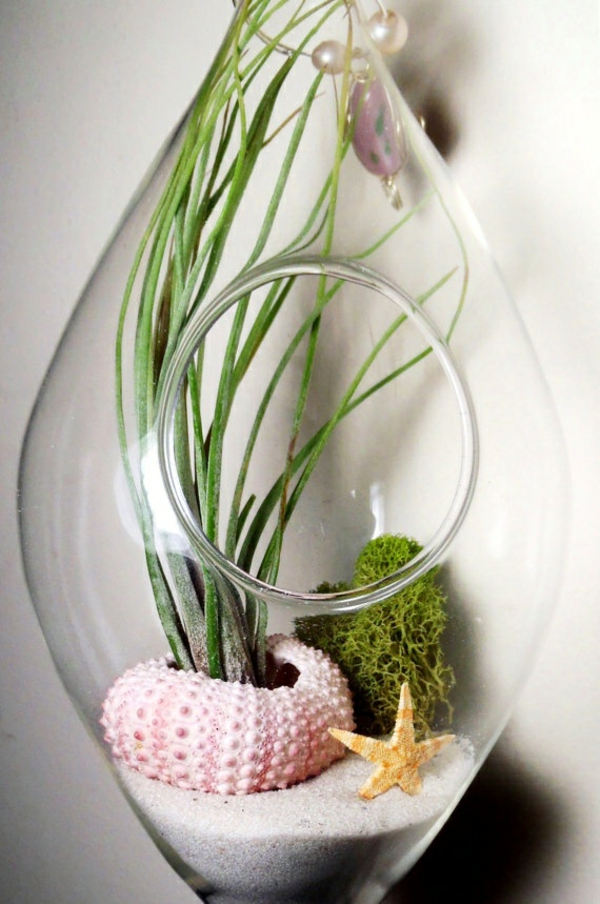 terrarium plants glass vessels rounded with opening mermaid moss