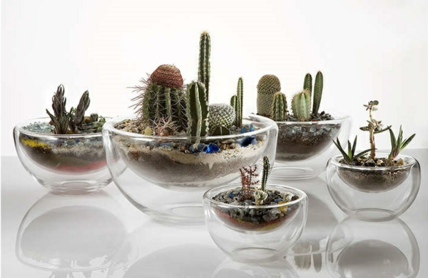 terrarium plants cacti terrarium self-build indoor plants easy-care