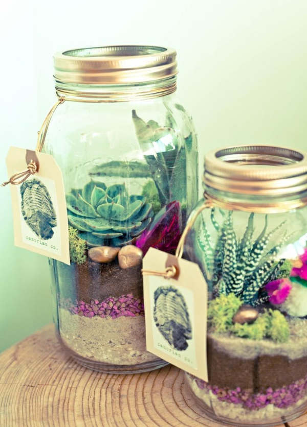 terrarium plants succulents terrarium build yourself