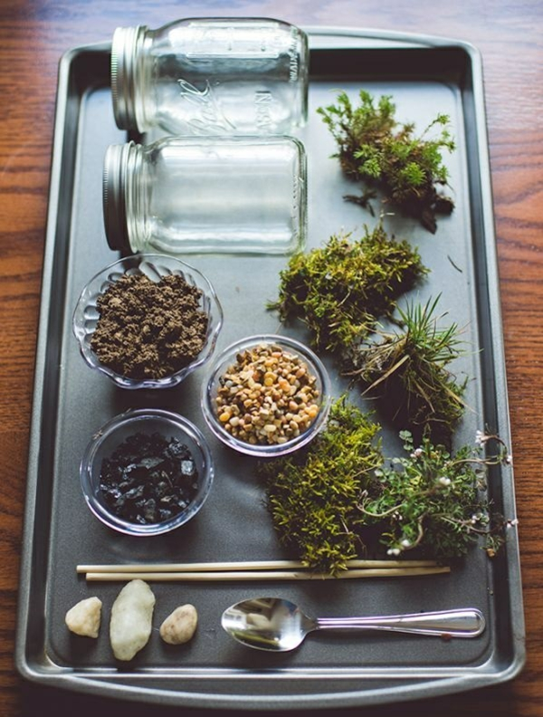 terrarium plants terrarium itself build materials