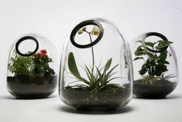 terrarium plants terrarium itself make indoor plants decoys